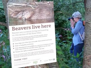 Signage about beavers on the River Otter