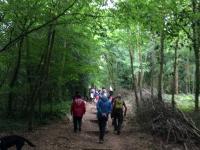 Group of walkers in Stoke Woods