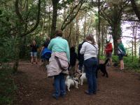 Group of dog walkers in the trees