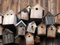 Lots of wooden bird boxes