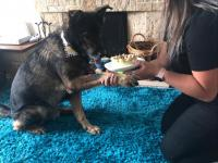 Retired Police Dog Bowser enjoying his cake.
