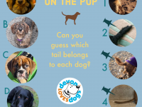 Poster of 4 dogs and their tails to match up.