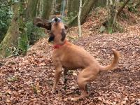 Dog playing in the woods