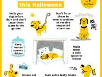 Halloween advice for keeping dogs safe at this time of year.