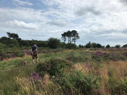 Person walking a Border Terrier across Mutters Moor